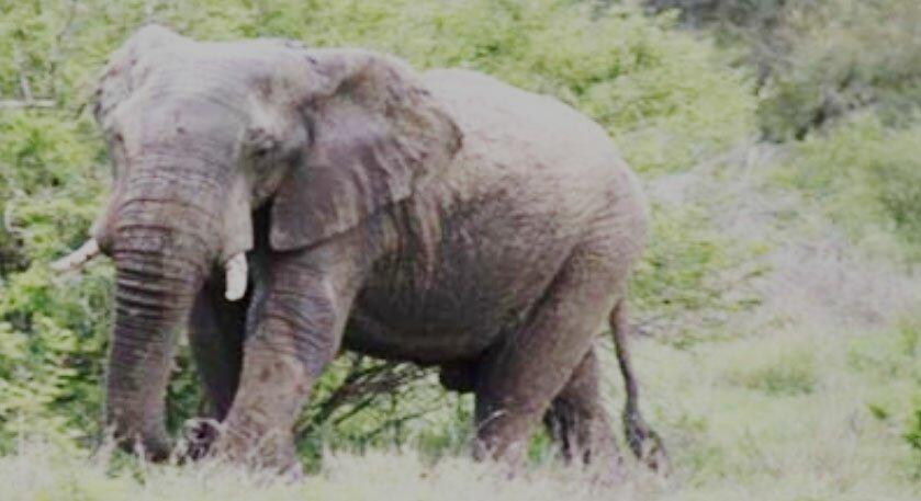 Elephant attack kills child in Boalkhali.